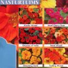 Tropaeolum x Collectie