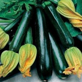 Courgette B.B. BIO Organic