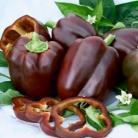 Paprika Chocolate