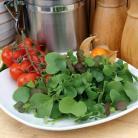 Salade mix Gourmet