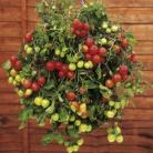 Tomaten Pot Tumbling