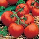 Tomaten Rond Ferline F1
