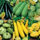 Courgette Collectie