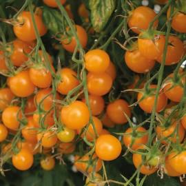 Tomaten Cherry Sunlemon F1