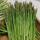 Asperge Mary Washington