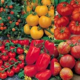 Collectie Tomaten