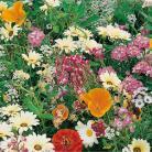 Bloemenmengsel Japans