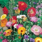 Bloemenmengsel Wildlife