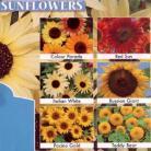 Helianthus zonnebloemen collectie