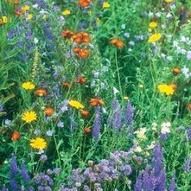 Wildbloemenmengsel Verwildering