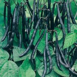 Slabonen Stam Purple Teepee