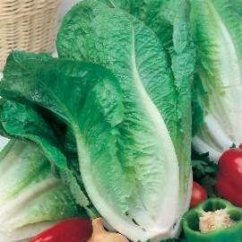 Sla Bindsla Lobjoits Green Cos