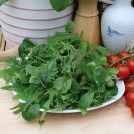 Salade mix  Ovation