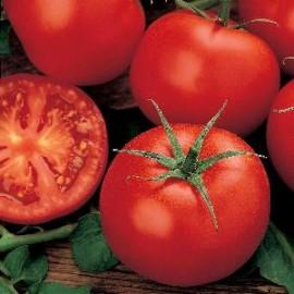 Tomaten Rond Moneymaker