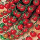 Tomaten Cherry Sweet Million F1