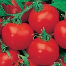 Tomaten Rond Shirley F1