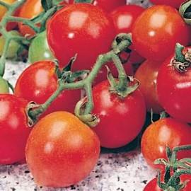 Tomaten Rond Garden D BIO ZADEN