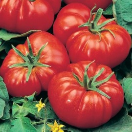 Tomaten vlees Marmande