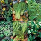 Collectie Oriental bladgroente
