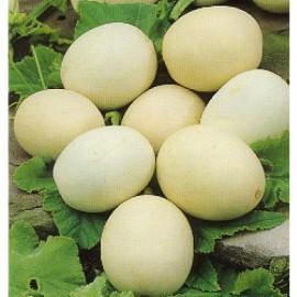 Kalabas Nest Egg