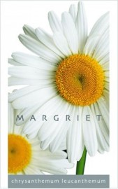 Chrysanthemum / Margriet   per 100
