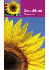 Helianthus Zonnebloem per 100