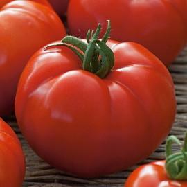 Tomaten vlees Country Taste F1