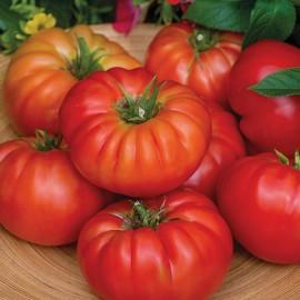 Tomaten vlees Bountiful F1