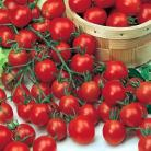 Tomaten Cherry Chipano F1