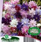 Aquilegia vulgaris Granny