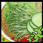 Broccoli z spruit